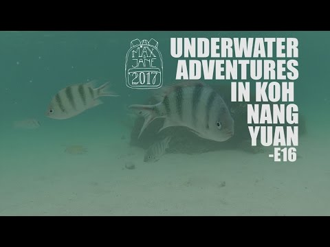 Koh Tao, Thailand | Best places to snorkel on Koh Tao! | South East Asia Travel Vlog E16