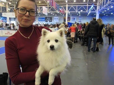 Международная выставка собак 2хFCI CACIB «Киевская Русь» и «Хрустальный кубок Украины»