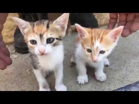 Ölü Adam Aşevi - Kedi Sahiplendirme