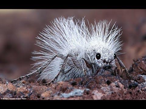 Spektakuläre Ameisen - Kluge Kolonie Insekten | Bedeutung für Medizin, Natur, Küche | Doku 2018 HD