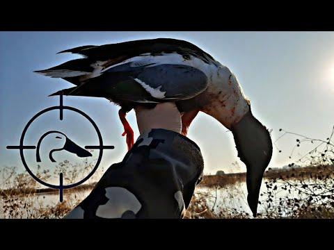 Mixed Bag California Duck Hunt!   11-16-19