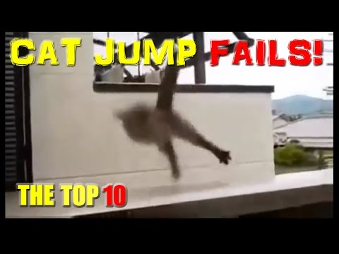 Cat Jump Fails Top 10 - Hilarious Funny Cats & Cute Kittens