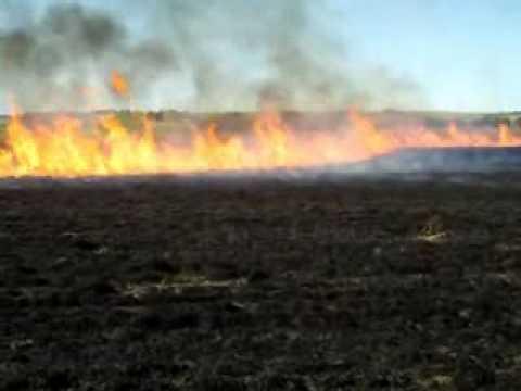 Native Production Grass Field Burn