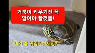 거북이 키우기 쉬운거 아닙니다ㅠㅠ 입양전에 알아야 할 …