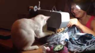 Кошка Милка хочет стать швеей(Моя проказница мешает маме шить платье., 2015-09-07T19:50:21.000Z)