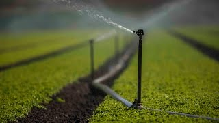 California farmers give up water to help fight drought