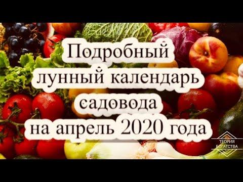 ПОДРОБНЫЙ ЛУННЫЙ КАЛЕНДАРЬ САДОВОДА НА АПРЕЛЬ 2020 ГОДА