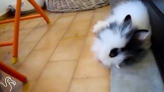 Bunny Flops...