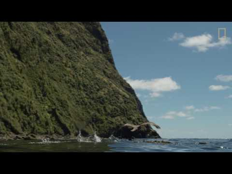 Tristan Da Cunha - National Geographic Pristine seas