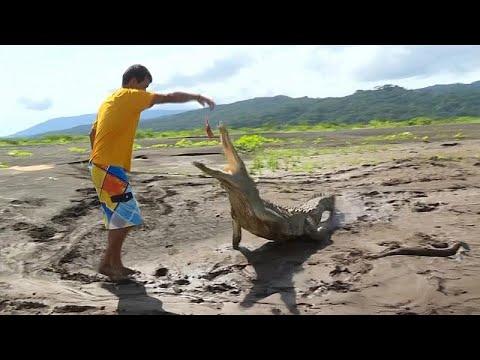 شاهد: شاب من كوستاريكا يطعم التماسيح البرية لكسب لقمة عيشه …  - نشر قبل 4 ساعة