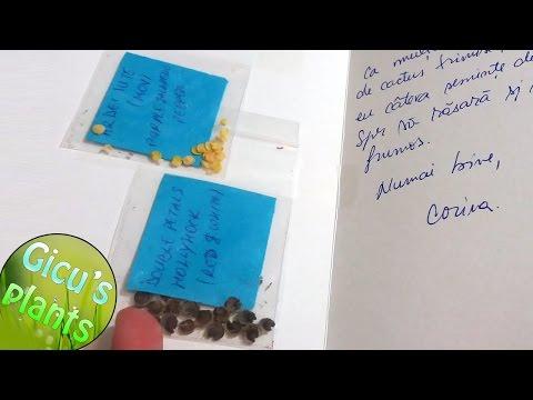 Scrisoare cu seminte din Canada de la Corina (fifi fifi pe youtube)