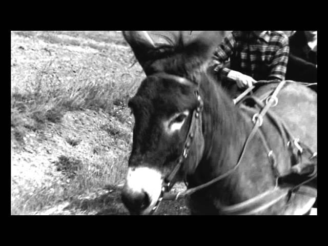 Au hasard Balthazar - Trailer (Il Cinema Ritrovato al cinema)