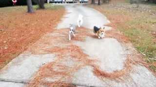 E-collar Training Off-leash Reliable Dog- Take The Lead K9 Training