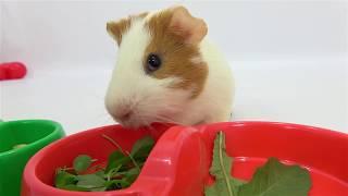 Вкусняшки для Свинки от Милусик Ланусик