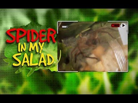Huntsman Spider Found In Packaged Salad   Zoe & Karen Perry's Exclusive ACA Interview