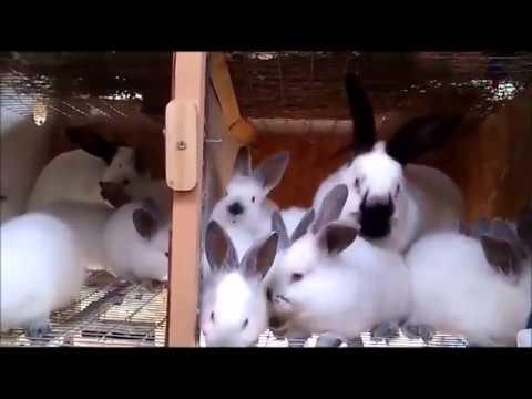 Купить первоклассные клетки для кроликов. - YouTube