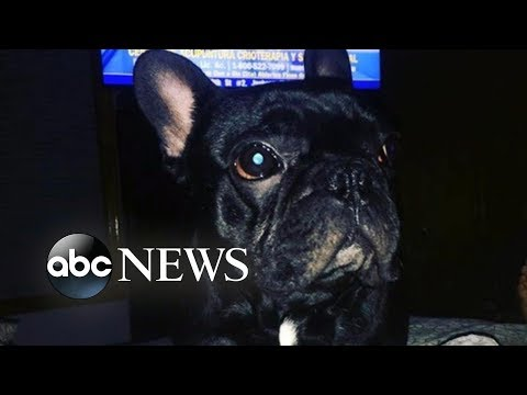 Dog dies in plane's overhead luggage bin