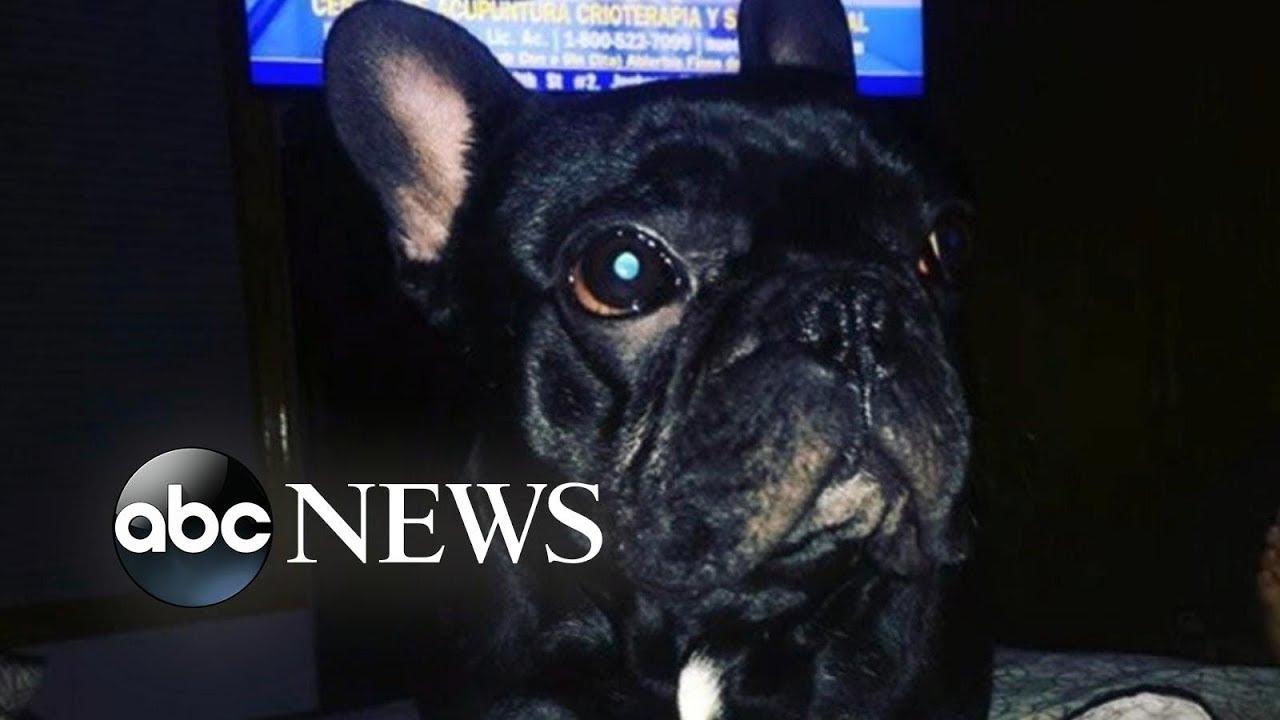 Dog dies in plane's overhead luggage bin