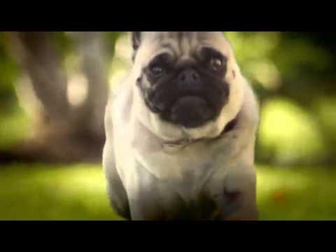 Самая смешная порода собак на свете ()