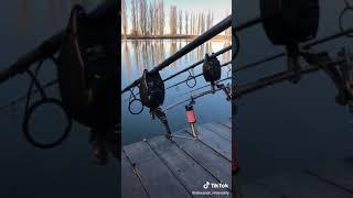Поклёвка карпа карпфишинг рыбалка