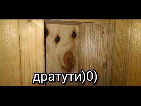 фото дратути мем собака