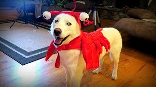 10 Cool Dog Halloween Costumes Test