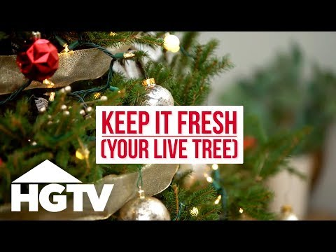 How To Care For A Live Christmas Tree - HGTV