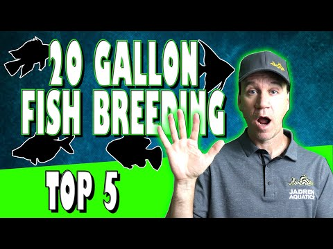 Top 5 Fish To Breed For Profit In A 20 Gallon Aquarium