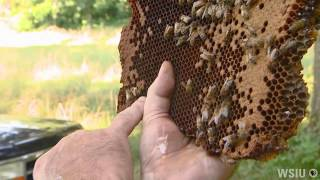Beekeeping in Southern Illinois