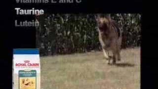 Royal Canin: The German Shepherd
