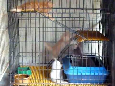 Download 64+  Gambar Kucing Anggora Dalam Kandang Terbaru
