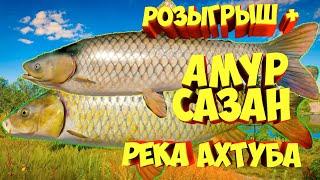 русская рыбалка 4 розыгрыш - Амур Сазан река Ахтуба - рр4 фарм Алексей Майоров