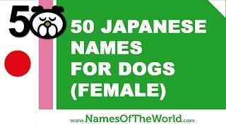 50 japanese names for female dogs -  best dog names - www.namesoftheworld.net