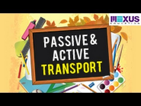Passive And Active Transport Youtube