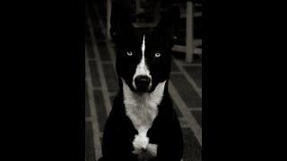Dogs Are Evil & Deceptive. Never Trust Them!