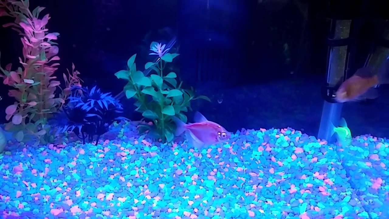 My glow in the dark fish tank youtube for Glow in dark fish