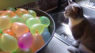 Кот и шарики с водой Видео с кошками, котами