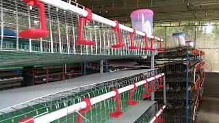 Hi tech quail(kaada) cages and farm setting Sunil (7736773720)