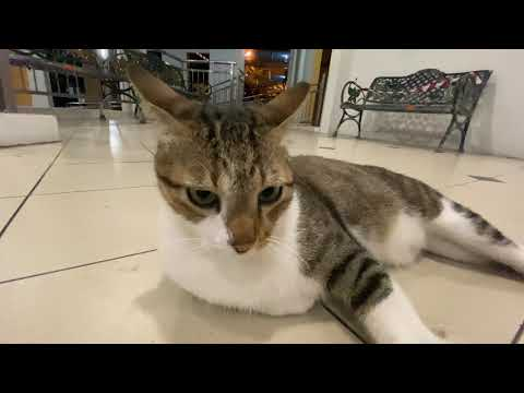 Cute Kucita Cat Chillaxing to Tango Music in HDB Void Deck Singapore #StayHome #WithMe 4K