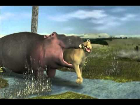 Hippo swallows female lion Vore Animation - YouTube
