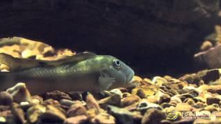 Biotop-Aquarien und Philosophie der Panta Rhei GmbH