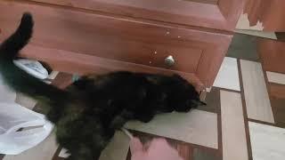 Кошка хочет секса - сую чесалку в зад