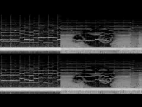 """RE: Lavender Town """"Missing Frequencies"""" Mystery *RAW UNEDITED VERSION*"""