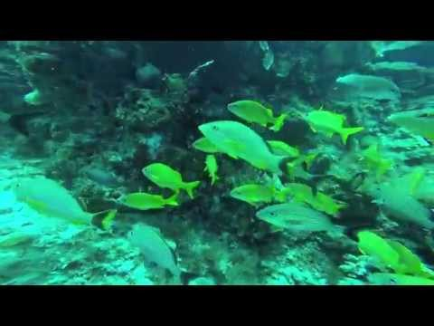JEFF RECTOR'S CANCUN REEF DIVE 2015