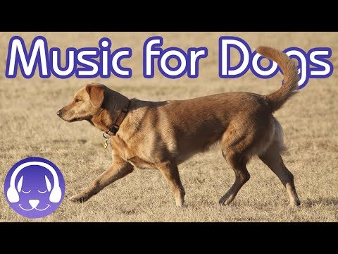 15 Hours of Classical Music for Dogs - Help your Dog Sleep FAST! (2019)