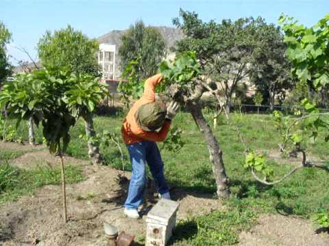 Veracruz Agropecuario - Alimentación de Abejas - TVMÁS de YouTube · Duración:  3 minutos 24 segundos  · Más de 1.000 vistas · cargado el 13.03.2014 · cargado por TVMÁS