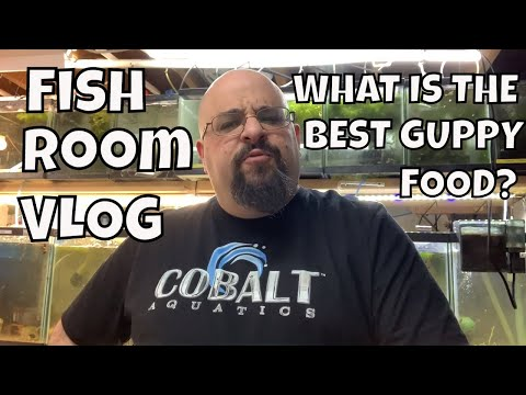 Aquarium Fish Room VLOG What Is The Best Guppy Food?