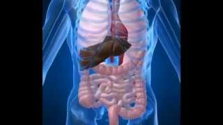 Gallbladder pain - How to know if what you are feeling is gallbladder pain - LILAPDOC- You.flv