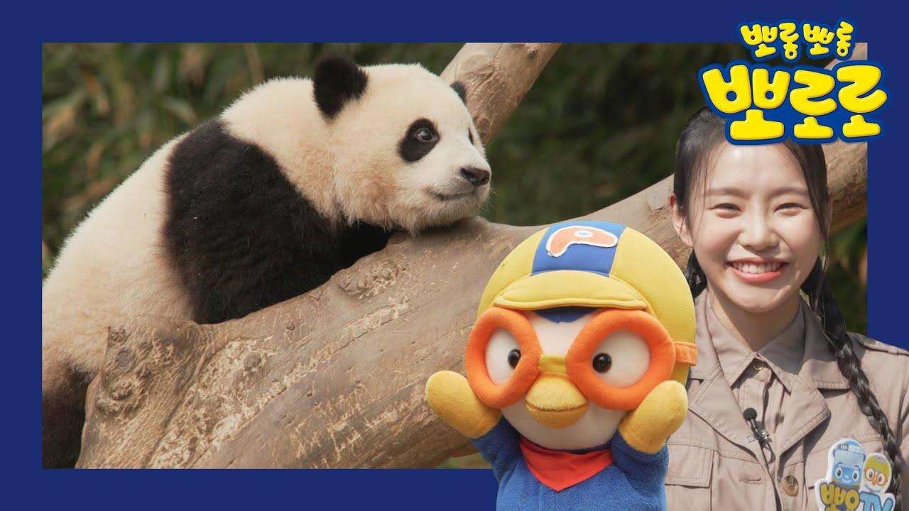 동물원 구경해요! | 1화 아기 판다를 찾아서 | 뽀로로 랜선동물원 투어! | 방구석 소풍 여행