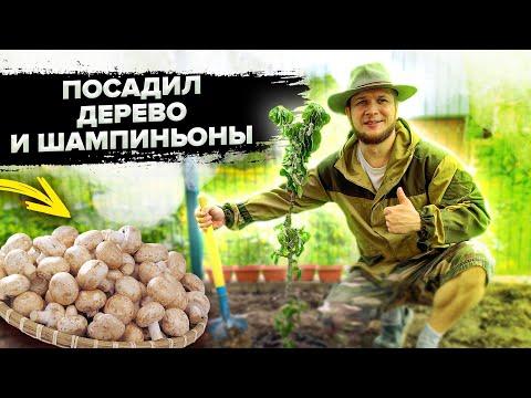 Уехал из Москвы в деревню! Один день из загородной жизни